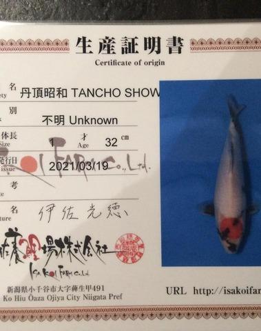 Jumbo Tosai HQ Tancho Showa Isa Koi Farm 1 - 3 Certificats Disponiles